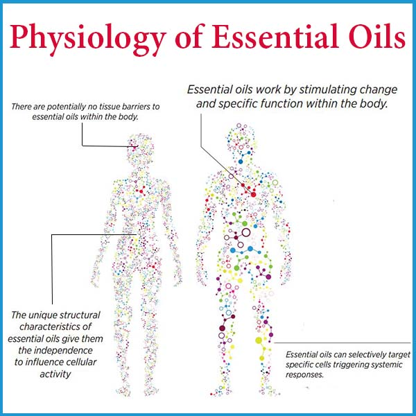 The Physiology of Essential Oils